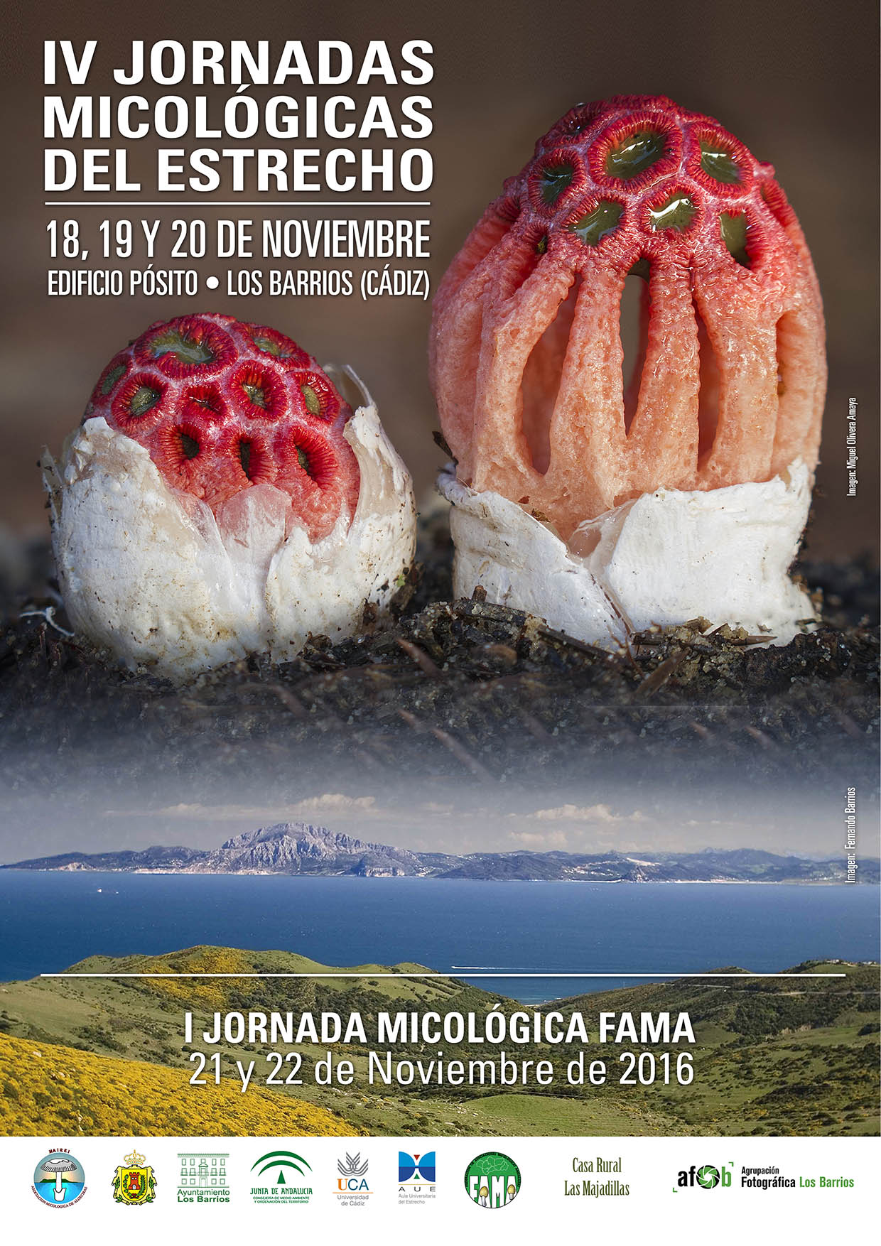«IV Jornadas Micológicas del Estrecho» los días 18, 19 y 20 de Noviembre
