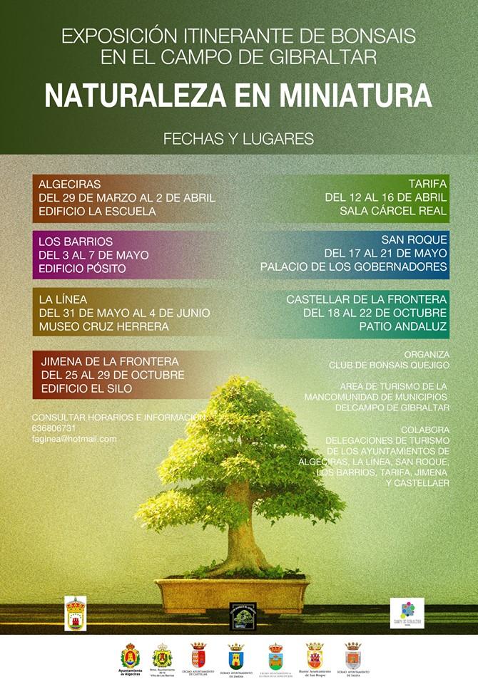Exposición itinerante de bonsáis en Los Barrios del 3 al 7 de mayo.