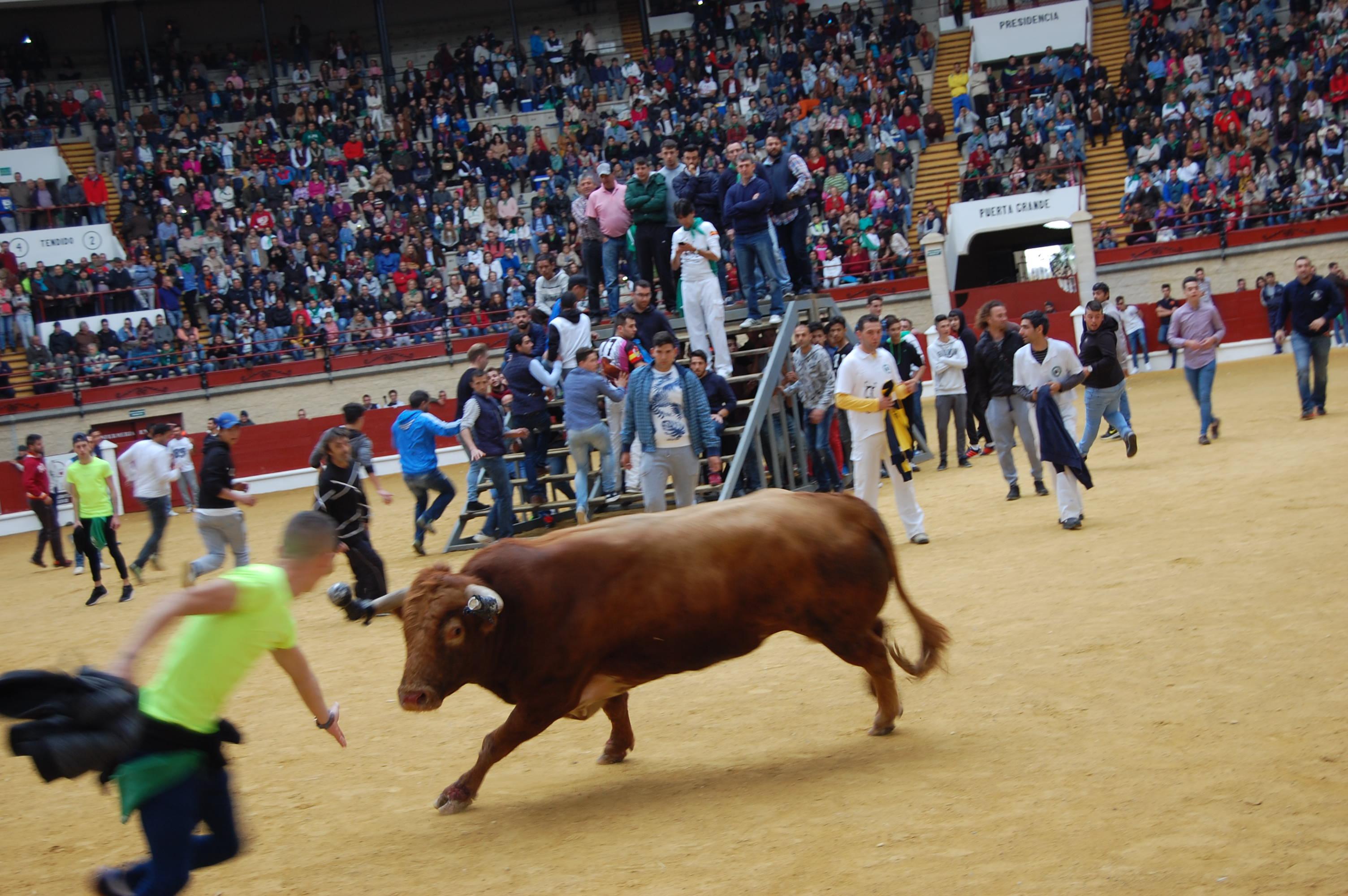 Fiesta del Toro Embolao de Los Barrios 2017 15 y 16 de abril.