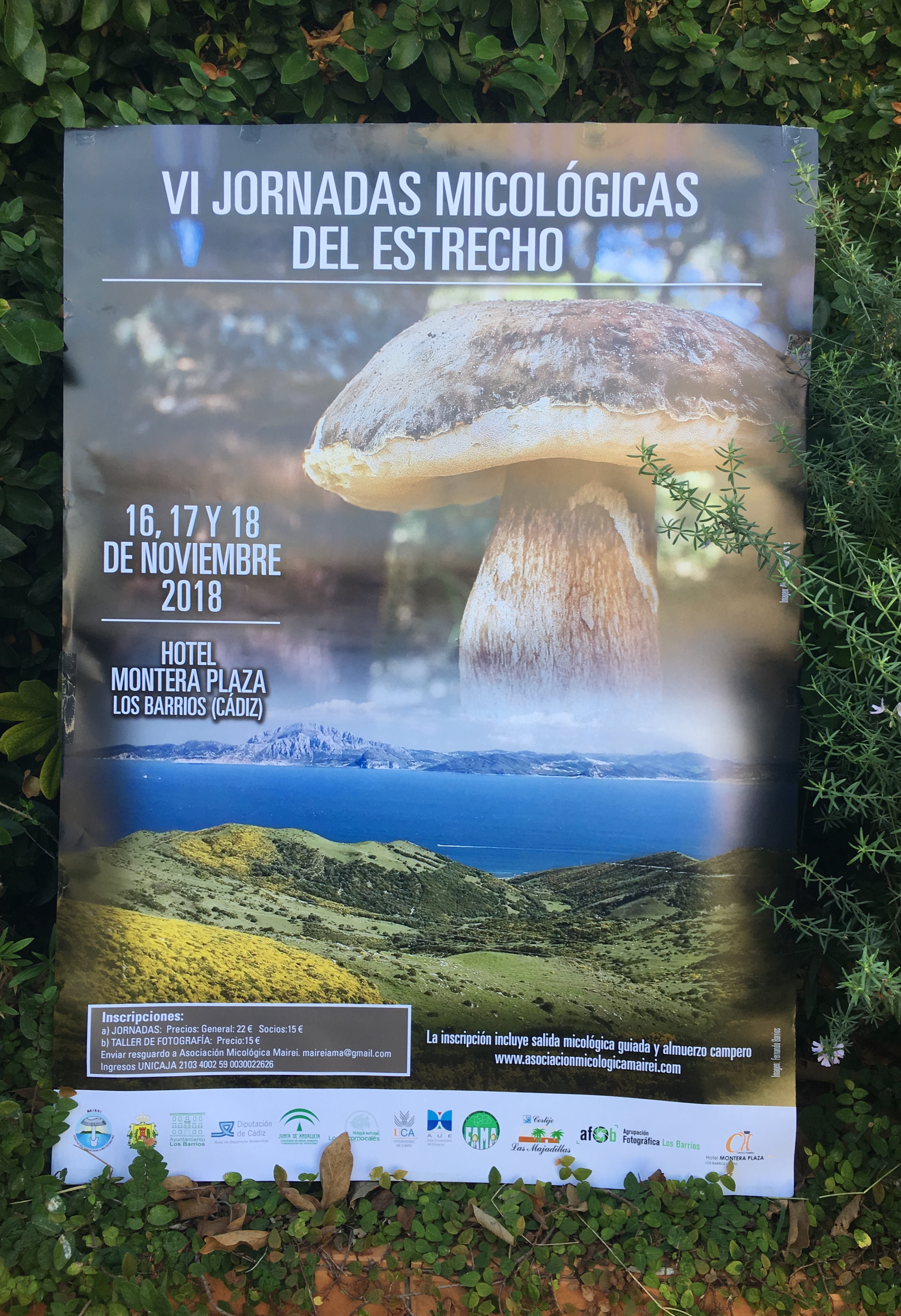 VI Jornadas Micológicas del Estrecho 16,17 y 18 de noviembre.