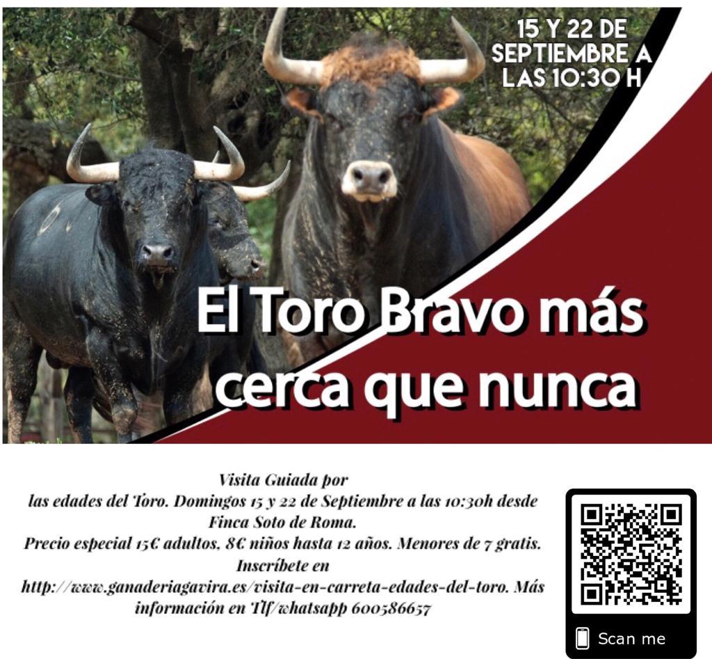 El Toro Bravo más cerca que nunca